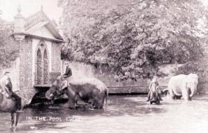 Horsington Pond in happier times